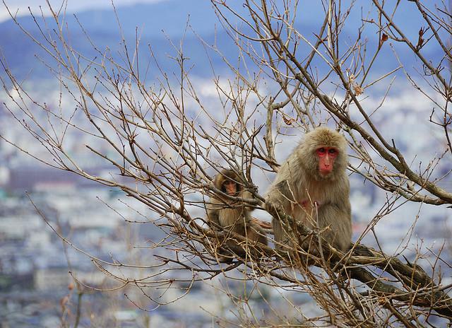 Wild Animals in Japan